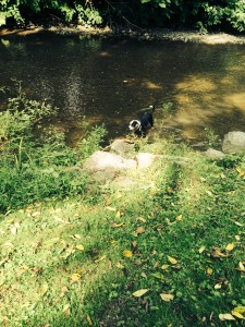 Dogs Love the Creek - Catharine Cottages/Watkins Glen, New York